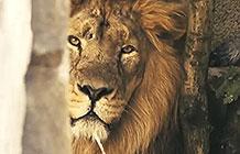 伦敦ZSL动物园疫情创意活动 动物园营销部