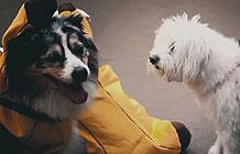 秘鲁流浪狗万圣节创意活动 给狗狗装扮