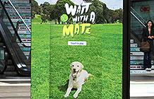 澳大利亚流浪狗救援线下互动装置 丢球