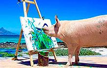 这只猪的艺术天分已经超越了广告人