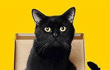 日本宅急便营销活动 猫咪自己会包装快递