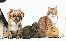 Analog 手表公司愚人节创意项目 猫毛变表带