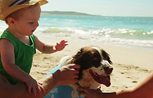 澳洲宠物狗保险公司bupa创意营销 狗狗防?鹁仍?></a> <div class=