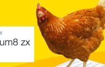 澳大利亚鸡肉快餐店Twitter营销活动 会发twitter的鸡