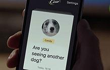 俄罗斯狗粮品牌Cesare创意智能硬件 狗狗想你了