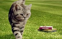 维嘉猫粮病毒营销 猫咪的校园生活