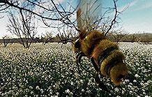 哈根达斯也要赶VR营销时髦 带你飞去看蜜蜂