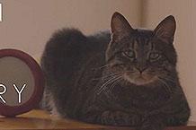 日本宠物食品KalKan感人营销 分开两年后的猫猫