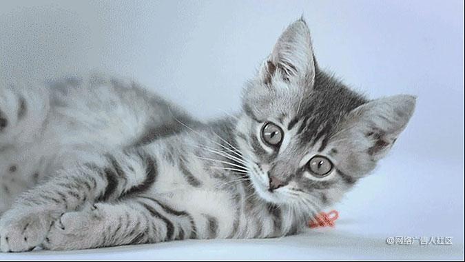 多伦多伟嘉猫粮创意活动 让猫咪镇静的电台