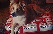 巴西百威NAB总决赛宣传活动 宠物垫