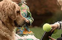 Google Play愚人节宣传广告 宠物应用商店