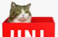优衣库新项目《网络红猫Maru来助阵》