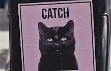 黎巴嫩乐透创意活动 给猫咪度个假