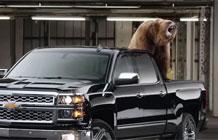 雪佛兰汽车病毒视频 熊出没