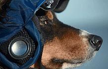 大众汽车病毒营销  自动遛狗设备