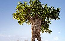 联合利华公益广告 老树走进城市