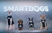 GEICO保险公司恶搞广告 聪明狗狗