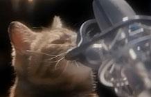 伟嘉Temptations猫粮80年代风格音乐MV 不要忘记我