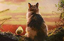英国Dreamies猫粮广告 开头很温馨结局很...