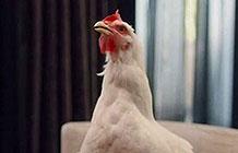 桑德森农场Sanderson Farms创意广告 人不如鸡
