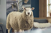 英国宜家宣传广告 羊