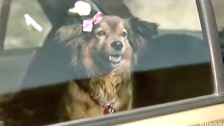 雪铁龙新C3广告 狗狗的爱情