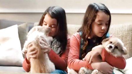 可爱的McVitie饼干广告 狗狗篇